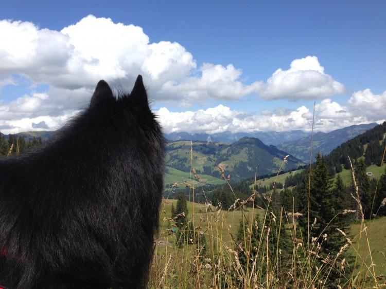 Höhentrainingslager und Bergtouren – In der Schweiz mit Gleich Personal Training