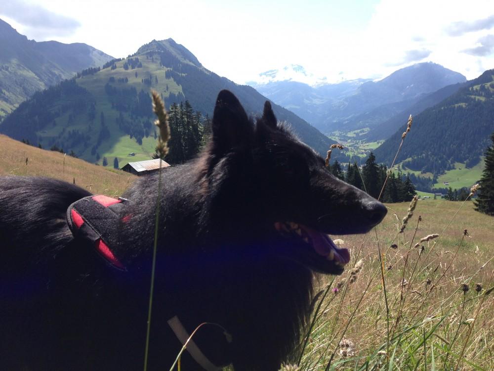 Sport und Spaß in den Alpen! Gleich Personal Training plant geführte Bergtouren und Kochabende in Österreich.